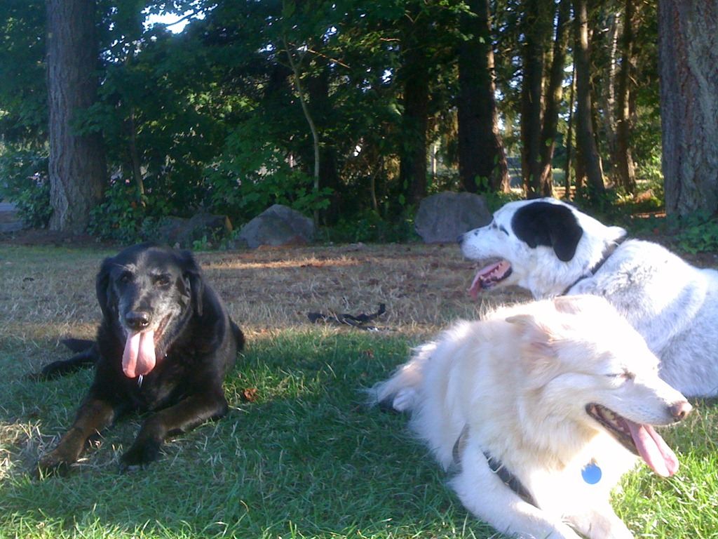 Did my dog have a stroke? Signs of Vestibular Syndrome